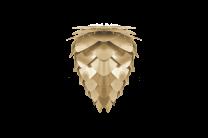 Conia mini brushed brass