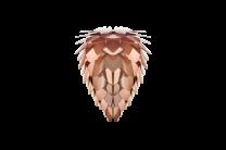 Conia mini copper